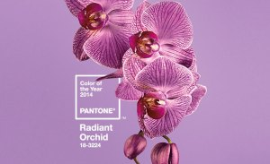 pantone-color-of-the-year-2014-radiant-orchid1